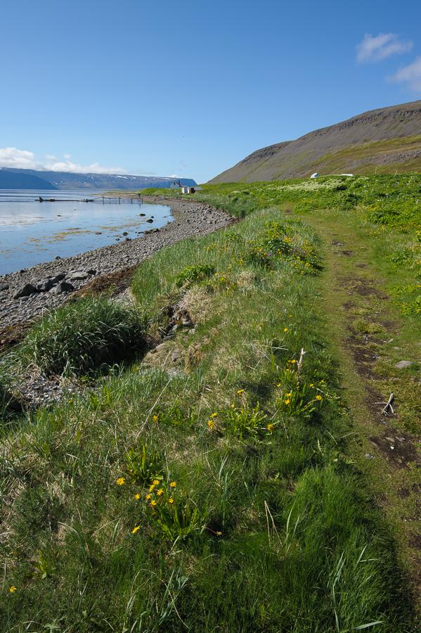village d'Heysteyri dans l'arctique