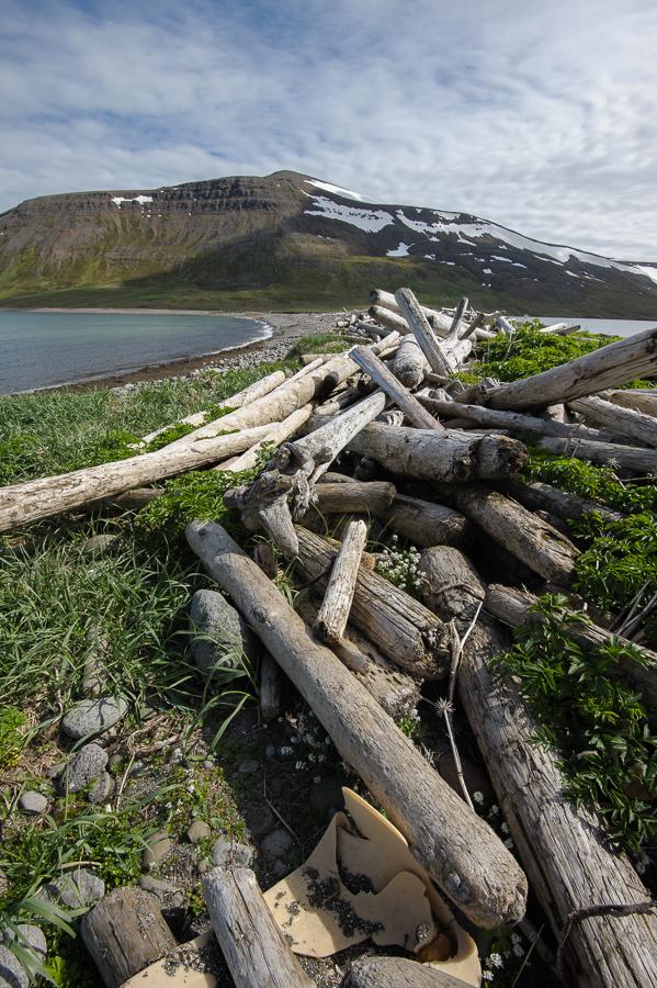 bois flottés sur les rives de l'Islande