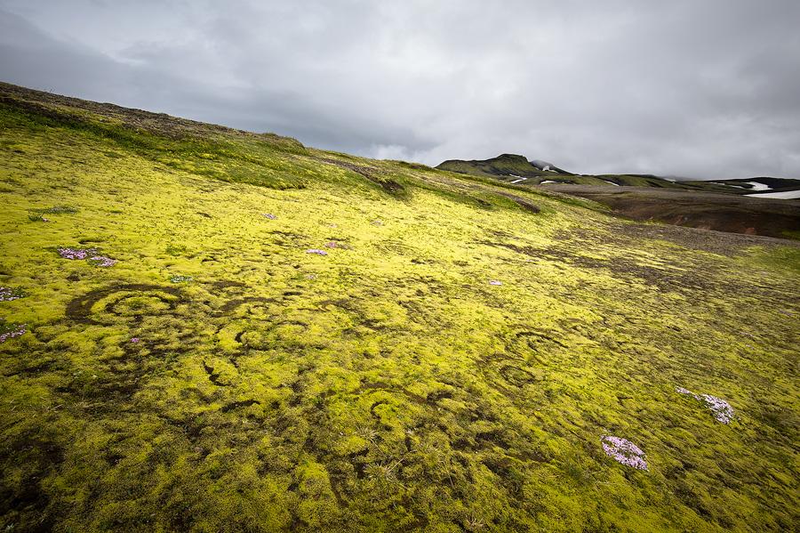 rond de sorcière dans la mousse en Islande