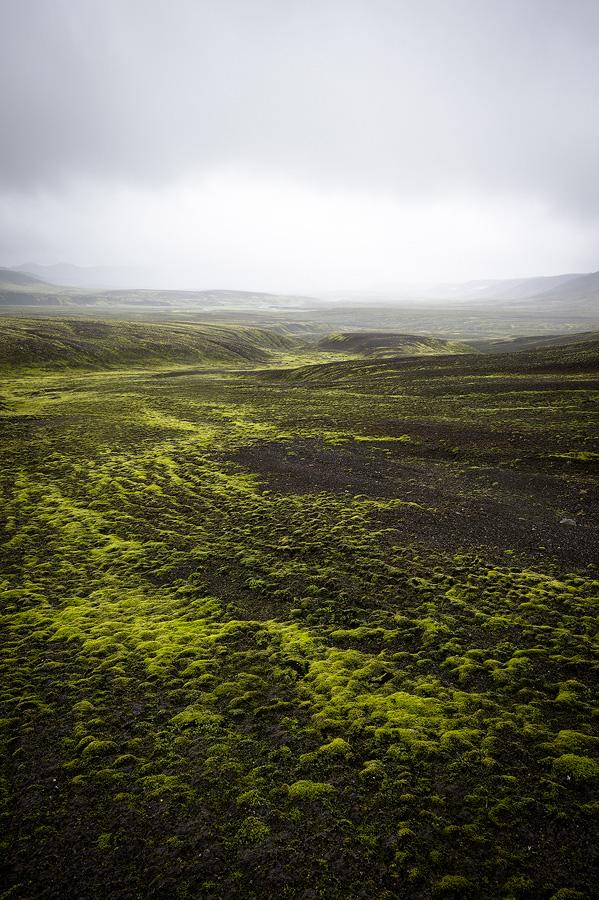 paysage de mousse verte en Islande dans la brume