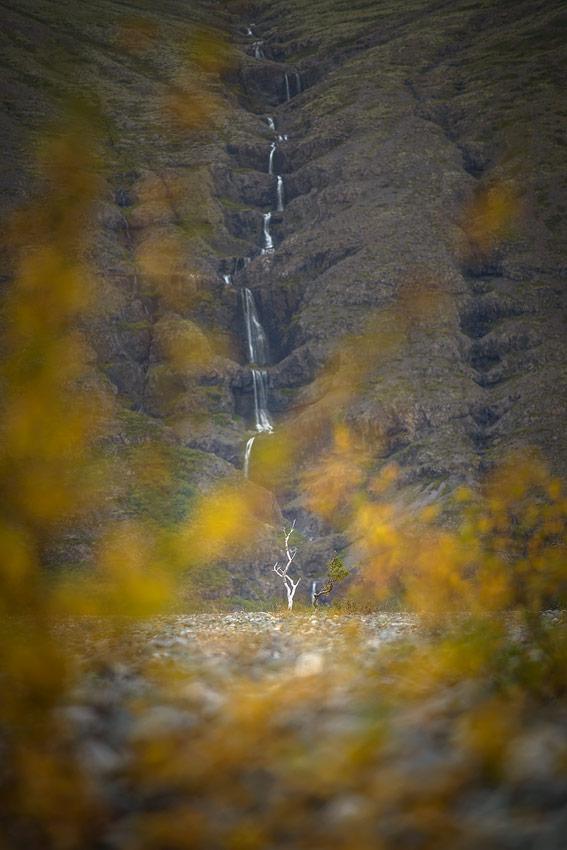 arbres sans feuilles en Islande