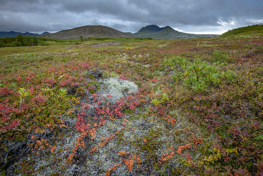 couleurs d'islande en automne dans le parc national de Skaftafell