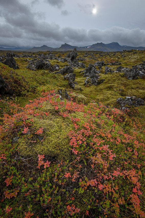 champ de lave , péninsule de snaefellsnes en Islande