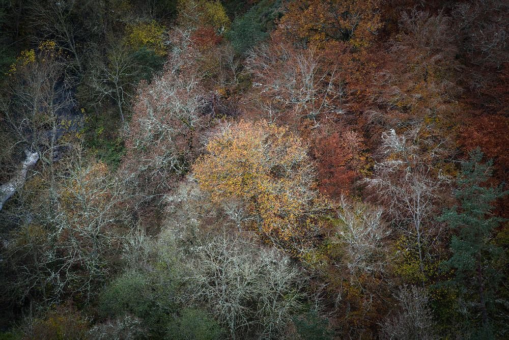 Arbres couvert de lichen à l'automne en auvergne