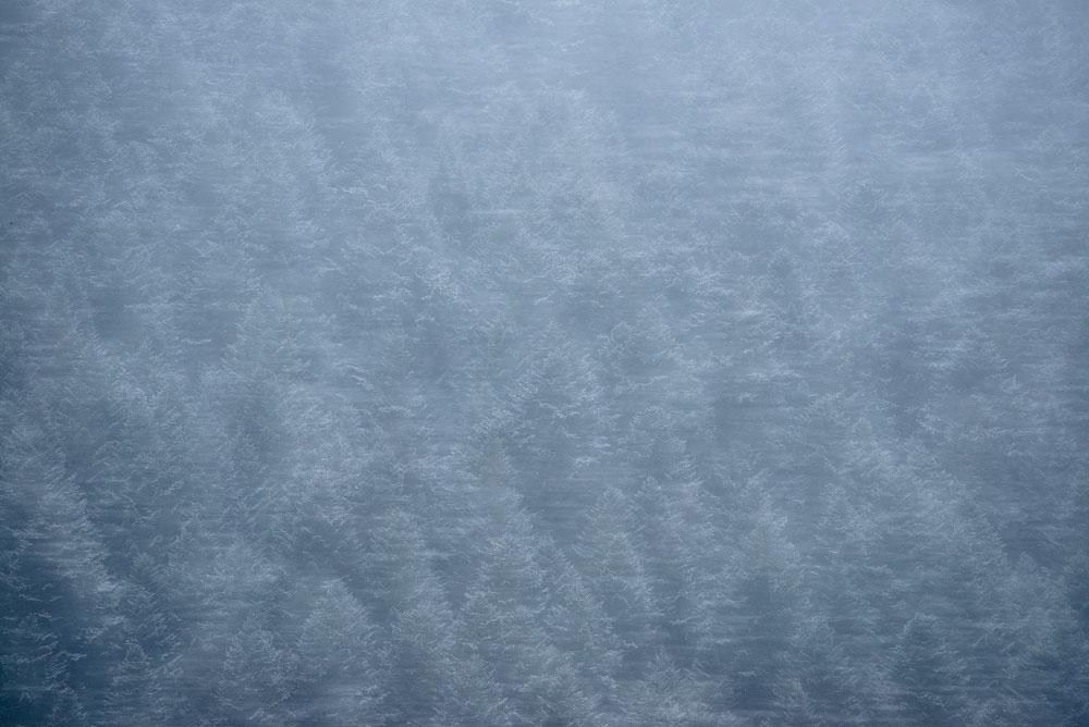 photographie artistique, des sapins en surimpression, couvert de neige