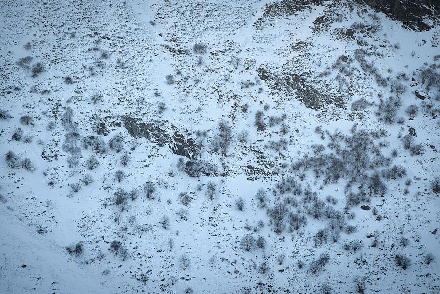 Arbres dans la neige, flanc du Peyre-Arse