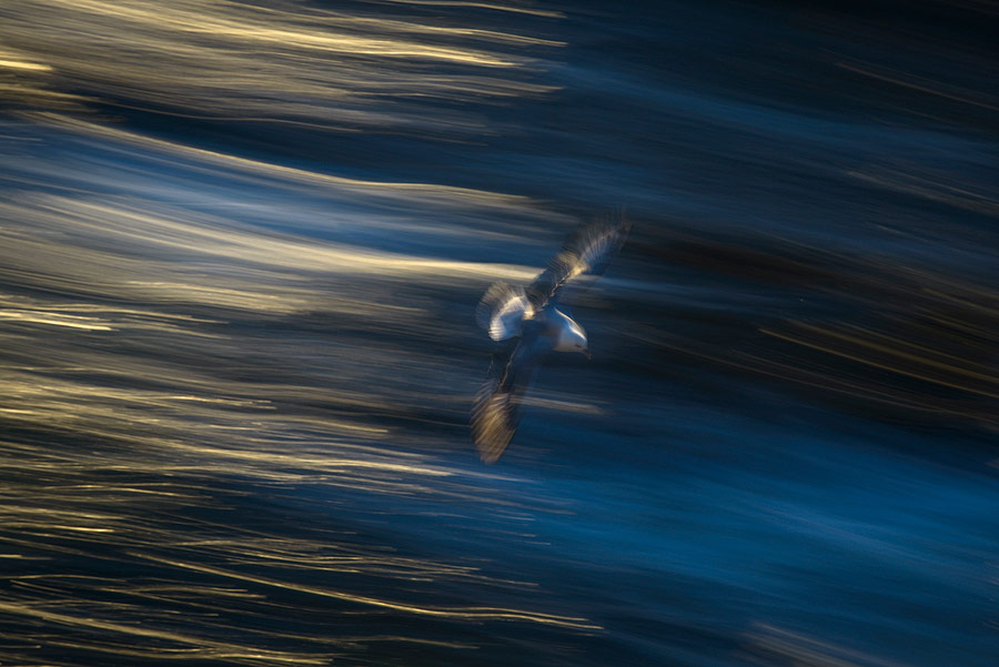 oiseau en filé