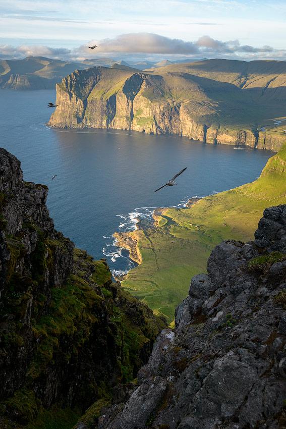 goélands sur l'île de vagar sur les Îles féroé