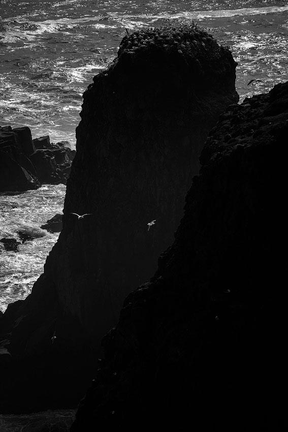 colonie de fou de bassan sur l'île Mykines