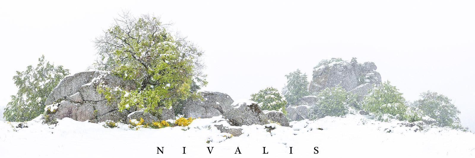 exposition photo paysage auvergne nivalis jérémie mazet