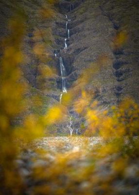 Arbre solitaire dans un paysage désertique du sud de l'Islande, près du Jokulsarlon